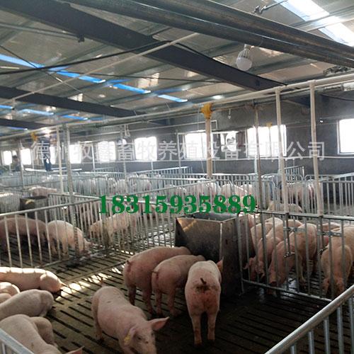 自动化养猪设是技术密集型的集约化生产