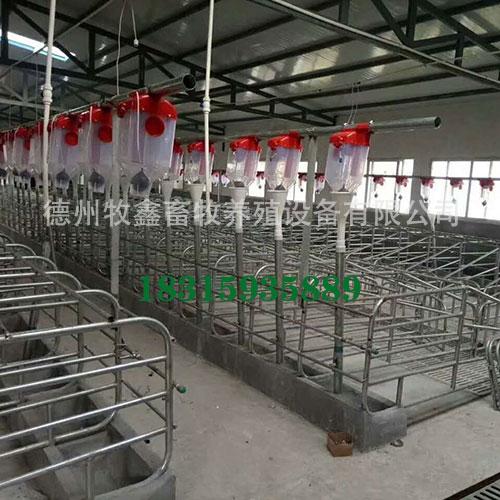自动化养猪设备要定期消毒以确保猪群健康